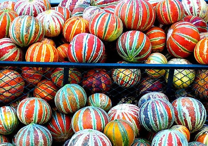 Striped Honeydew Melon