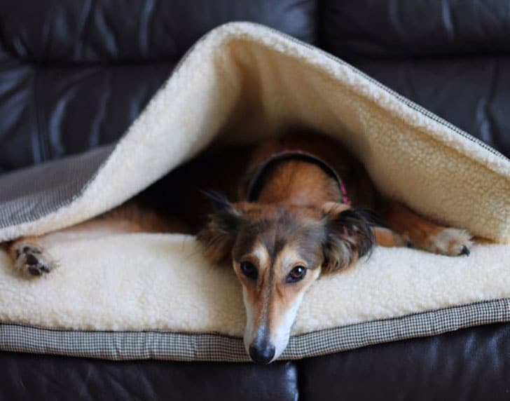 The Chatsworth Snuggle Sack Dog Bed