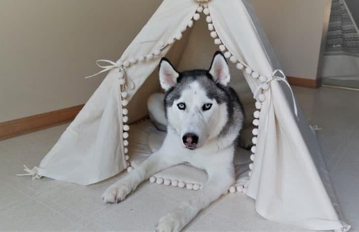 Tipii Dog Beds