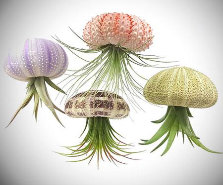Sea Urchin Jellyfish Air Plants