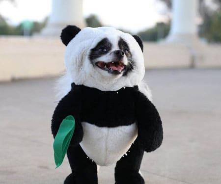 Panda Puppy Costume