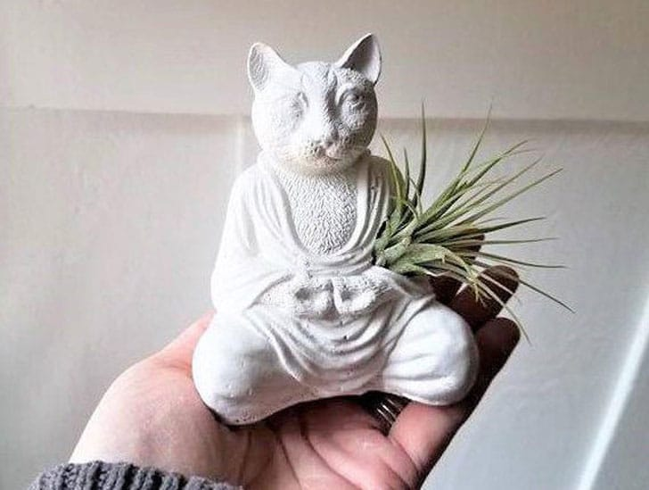 Zen Buddha Meditating Cat Air Plant Holder