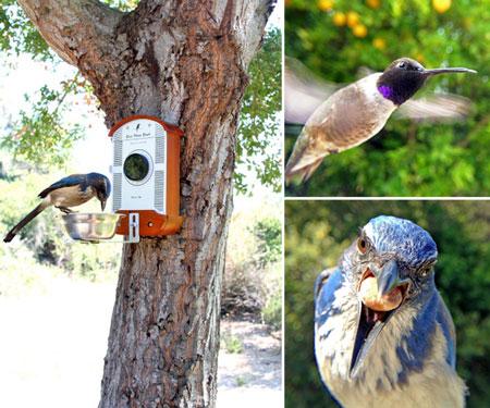 Bird Feeder Photo Booth