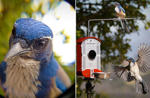 Bird Feeder Photo Booth