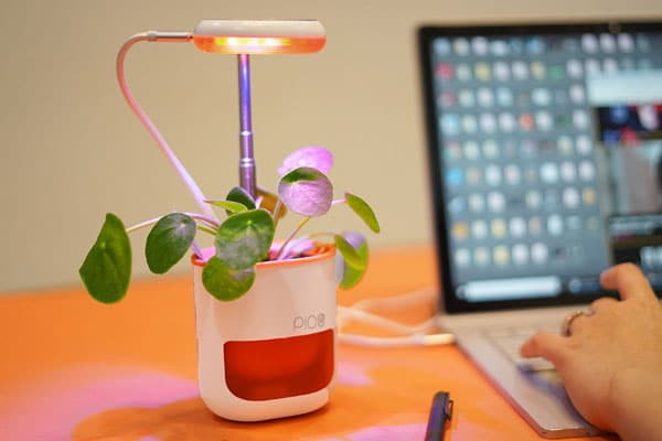 Pico: The Ultimate Indoor Plant Growing System