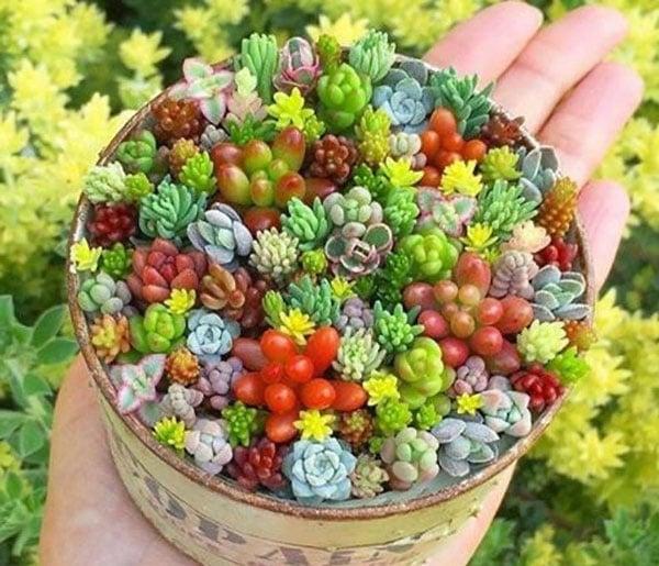 Mixed Succulent Seeds