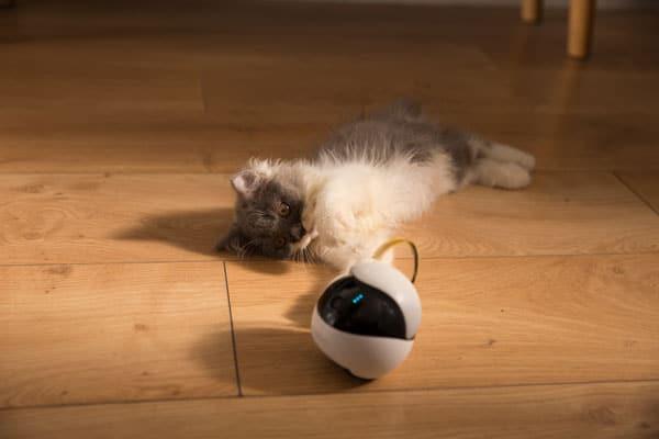 Ebo The Smart Robot Companion