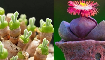 27 Unique & Cool Succulents You Can Buy