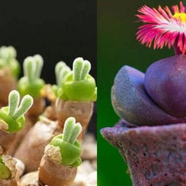 27 Cool Succulents You Can Buy – Most Beautiful Succulents
