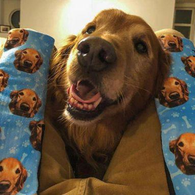 Customised Dog Socks