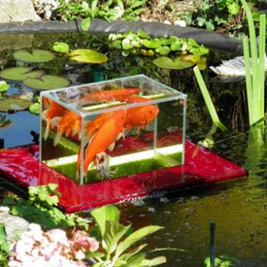 Floating Fish Pond Observatory