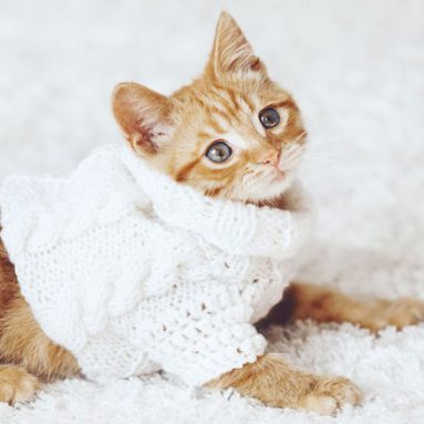 Cat Clothes – 55+ Best Items Of Cat Clothing For ALL Cats!
