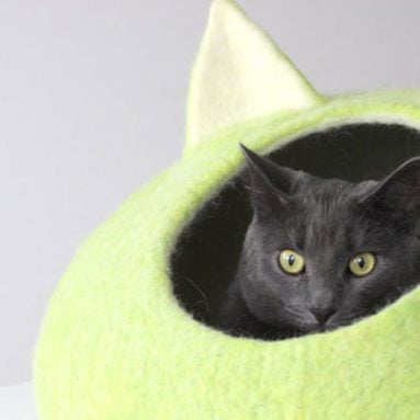 30 Coolest Cat Beds For Your Feline Friend