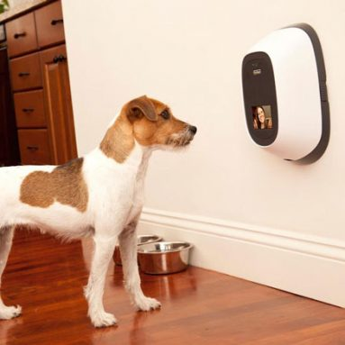 40+ Of The Coolest Dog Gadgets And Products For All Dogs