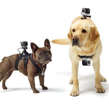 Dog Camera Mount