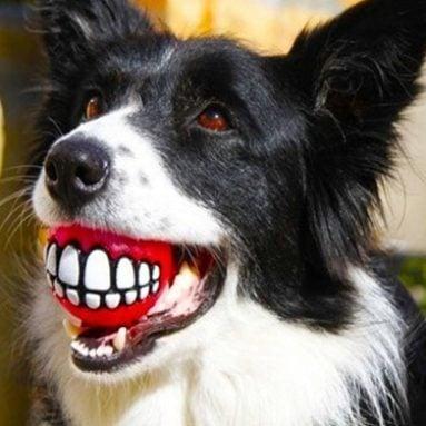 Grinning Teeth Dog Ball