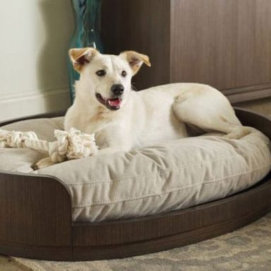 33 Cool & Unique Dog Beds for All Dogs